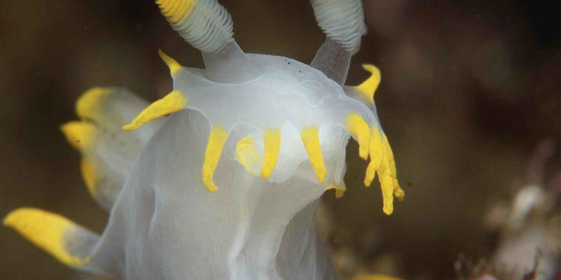 nudibranquios-Sin título-28